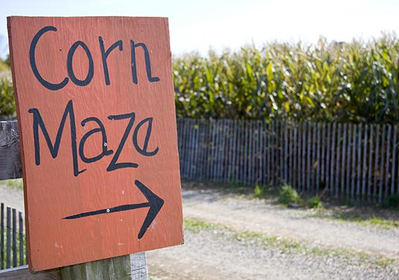 Corn Maze in Vermont - Fall Foliage Activities
