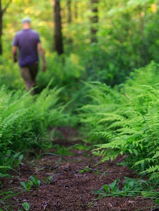 Vermont Hiking and Walking Trails - Near Okemo and Killington