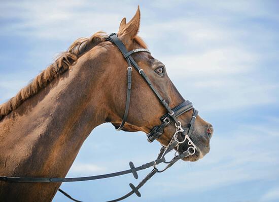 horse at dorset horse show
